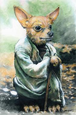 Yoda Chihuahua
