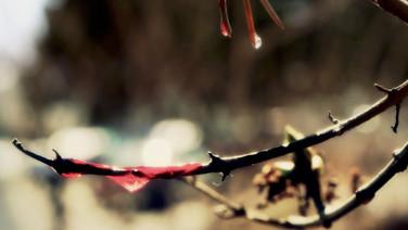 Experimentation: Plant Life