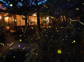 京都瓢亭蛍の宴〜贅沢至極の蛍火をあなたに