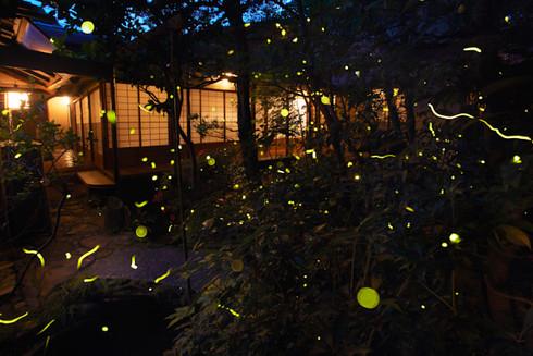 京都瓢亭蛍の宴・贅沢至極の蛍火