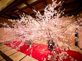 平成最後・日本一贅沢な花見の宴「新喜楽観桜会」開催しました。