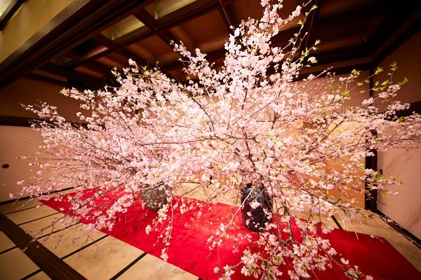 日本一贅沢な花見の宴