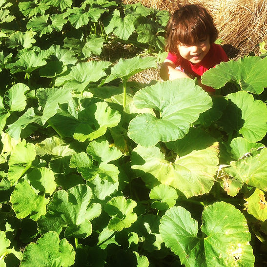 My baby counting 15 pumpkins in our pumpkin patch!