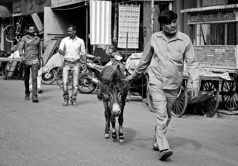 donkey-rohit-pansare-photography