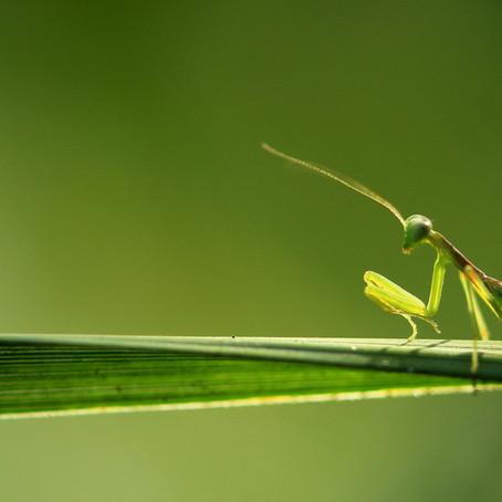Project 365: Day 27, Mantastic Mantis!!