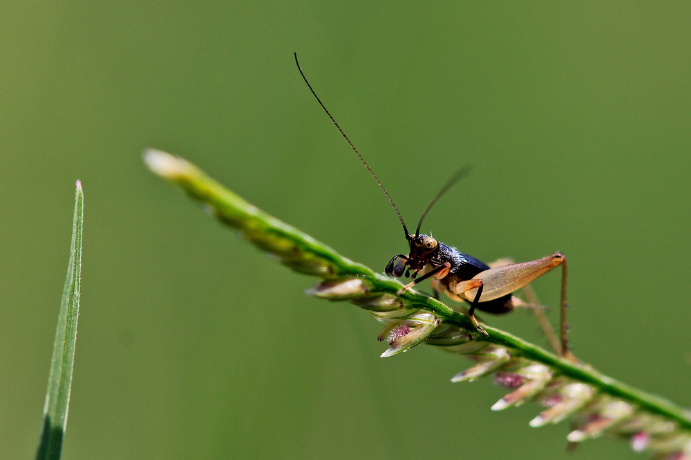 Project 365: Day 135, Cricket