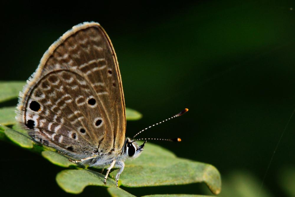 bright-babul-blue-rohit-pansare