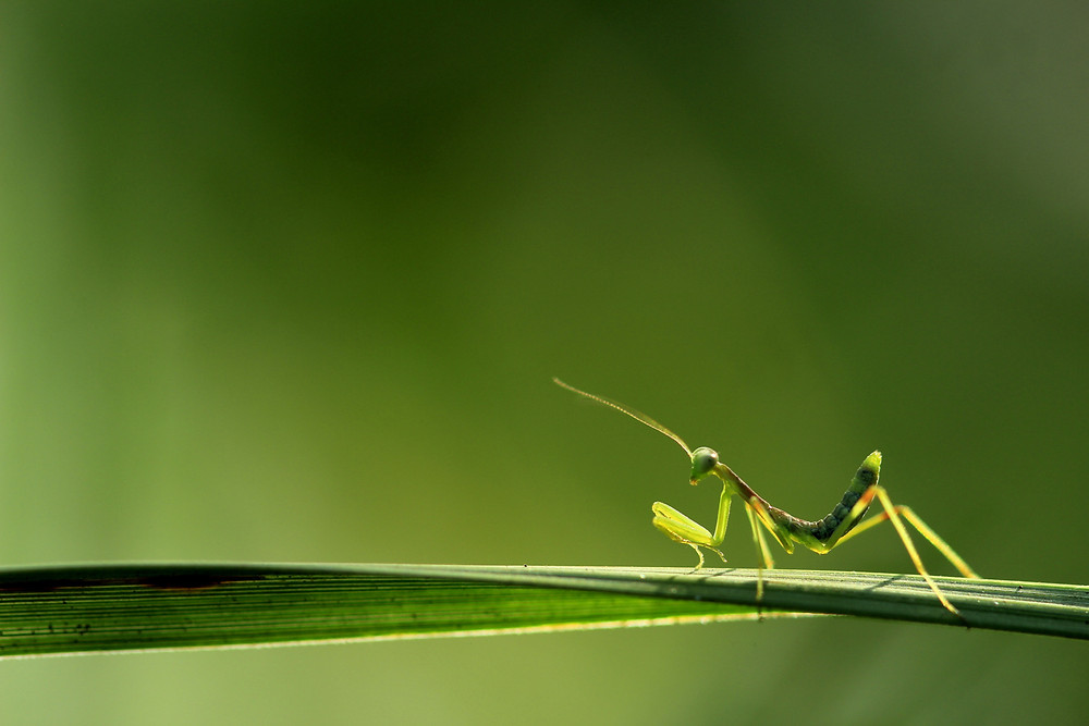 Project 365: Day 27, Mantastic Mantis!!
