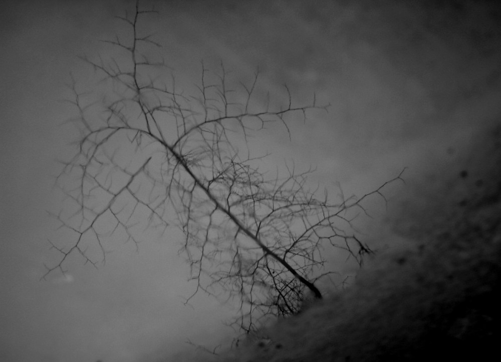 wet-dry-reflections-rohit-pansare