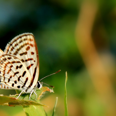 Project 365: Day 10, Butterflies…