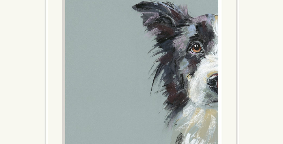 Curious Collie Signed Limited Edition Print by Nicky Litchfield