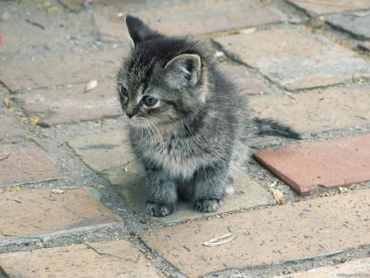 Бездомный котенок: что делать в первую очередь?