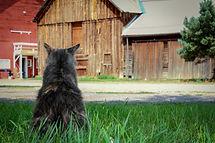 Barn Cat Hanging Outside in Colorado .jp