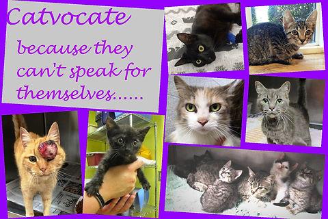 Catvocate webpage 1.jpg