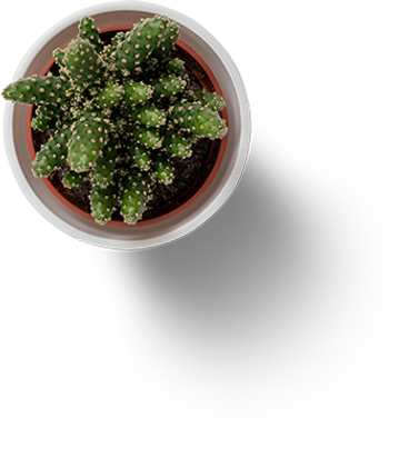 cactus4 (small).png