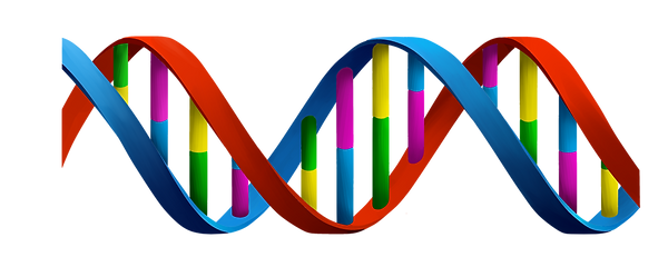 dna_PNG52.png