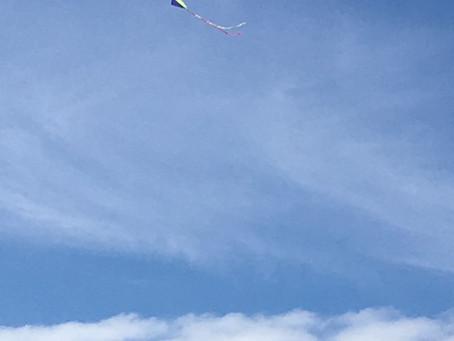 A Kite's view/ La Vue du cerf-volant