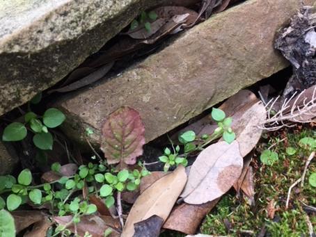 As Little as a Leaf/ Aussi petit qu'une feuille