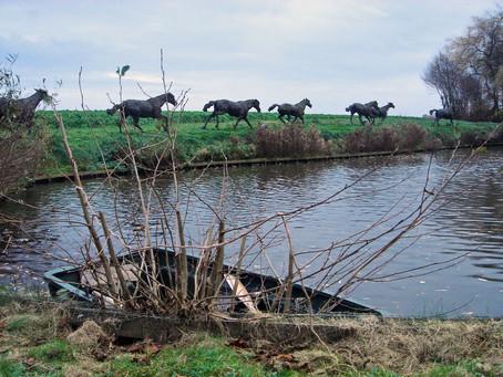 Escaped Horses/ Les Chevaux échapés