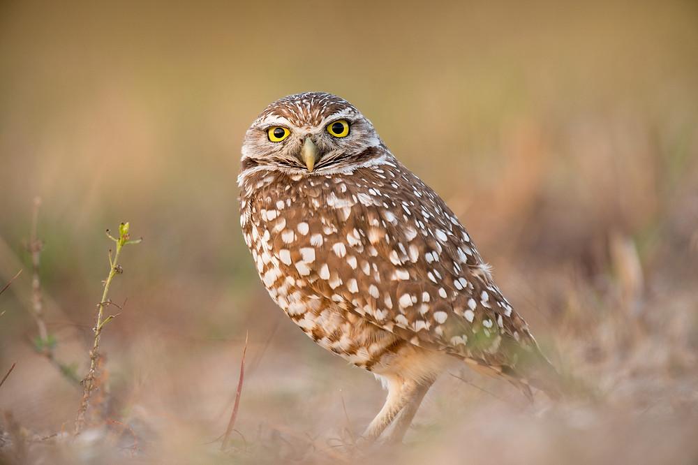 Owl Photo by Ray Hennessy on Unsplash