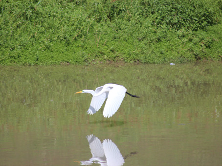 The Egret, the Alligator and the Egg/ L'aigrette, l'alligator et l'oeuf