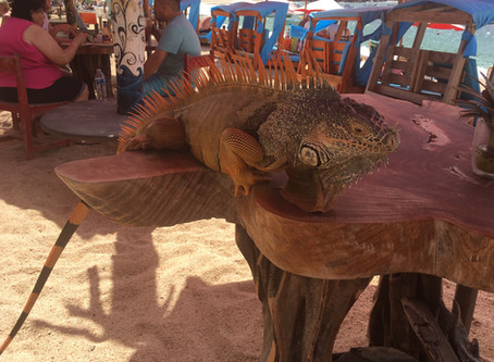 Mr. Iguana, a new friend/  M. Iguane, un nouvel ami