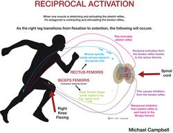 Reciprocal activation