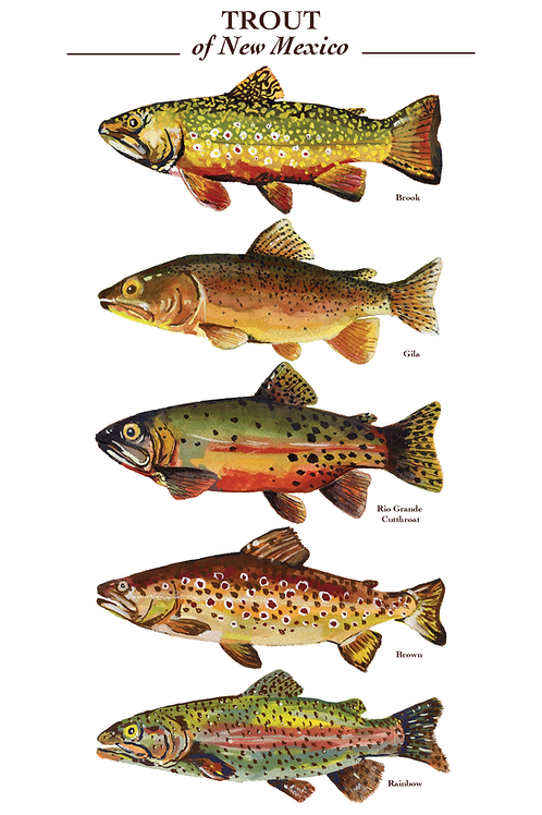 Trout of New Mexico Poster