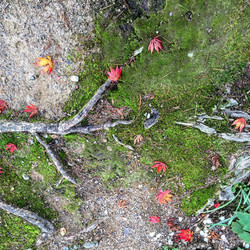 Forest floor. Hida Takayama, Japan.