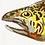 Thumbnail: Tiger Trout Original Gouache