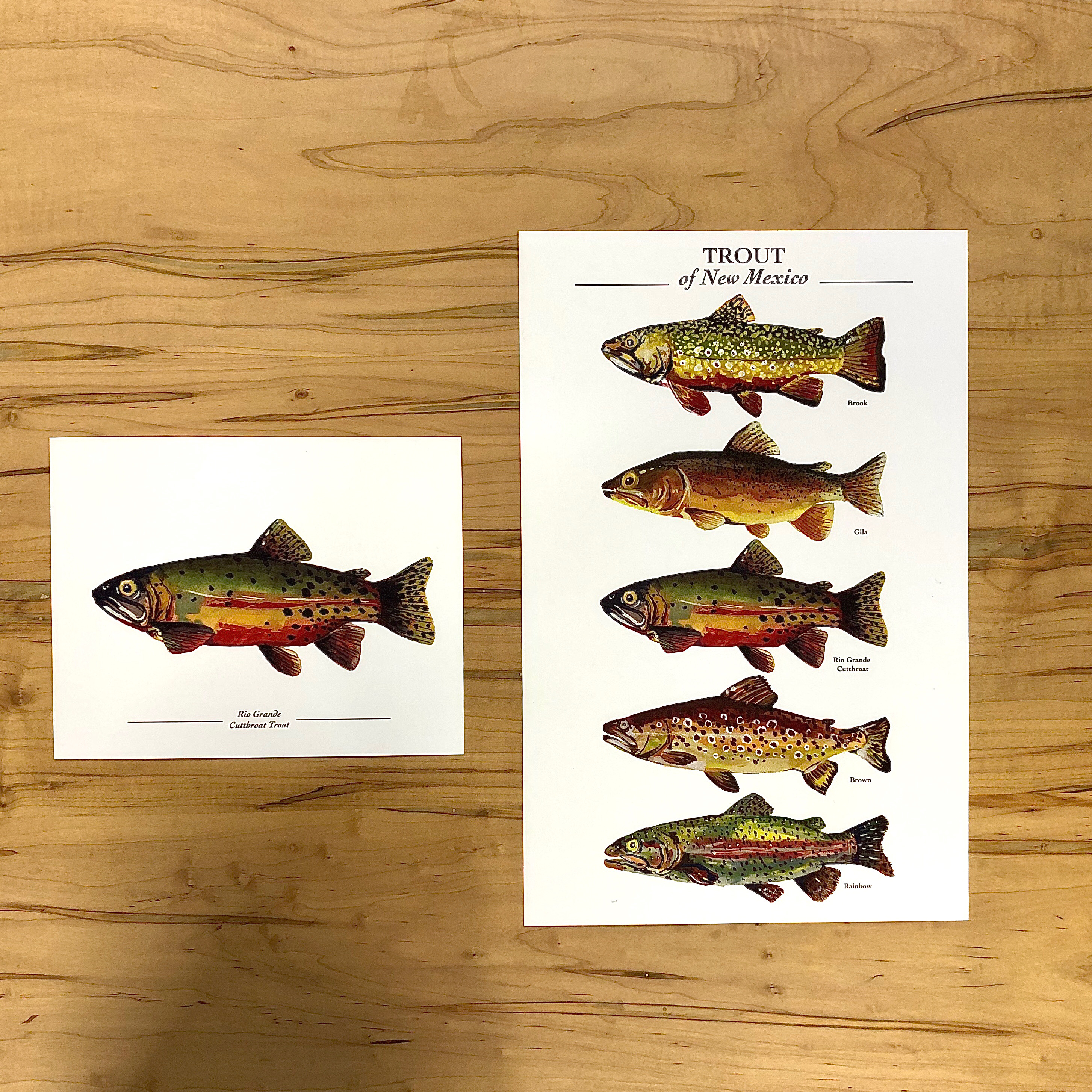Trout Paintings