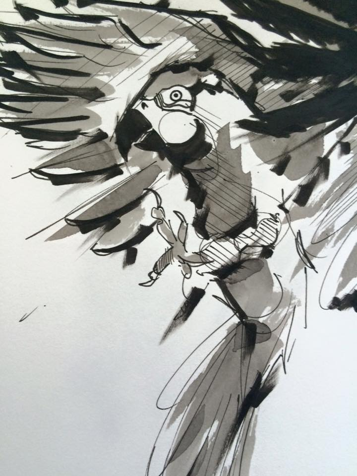 Bird concept / ink
