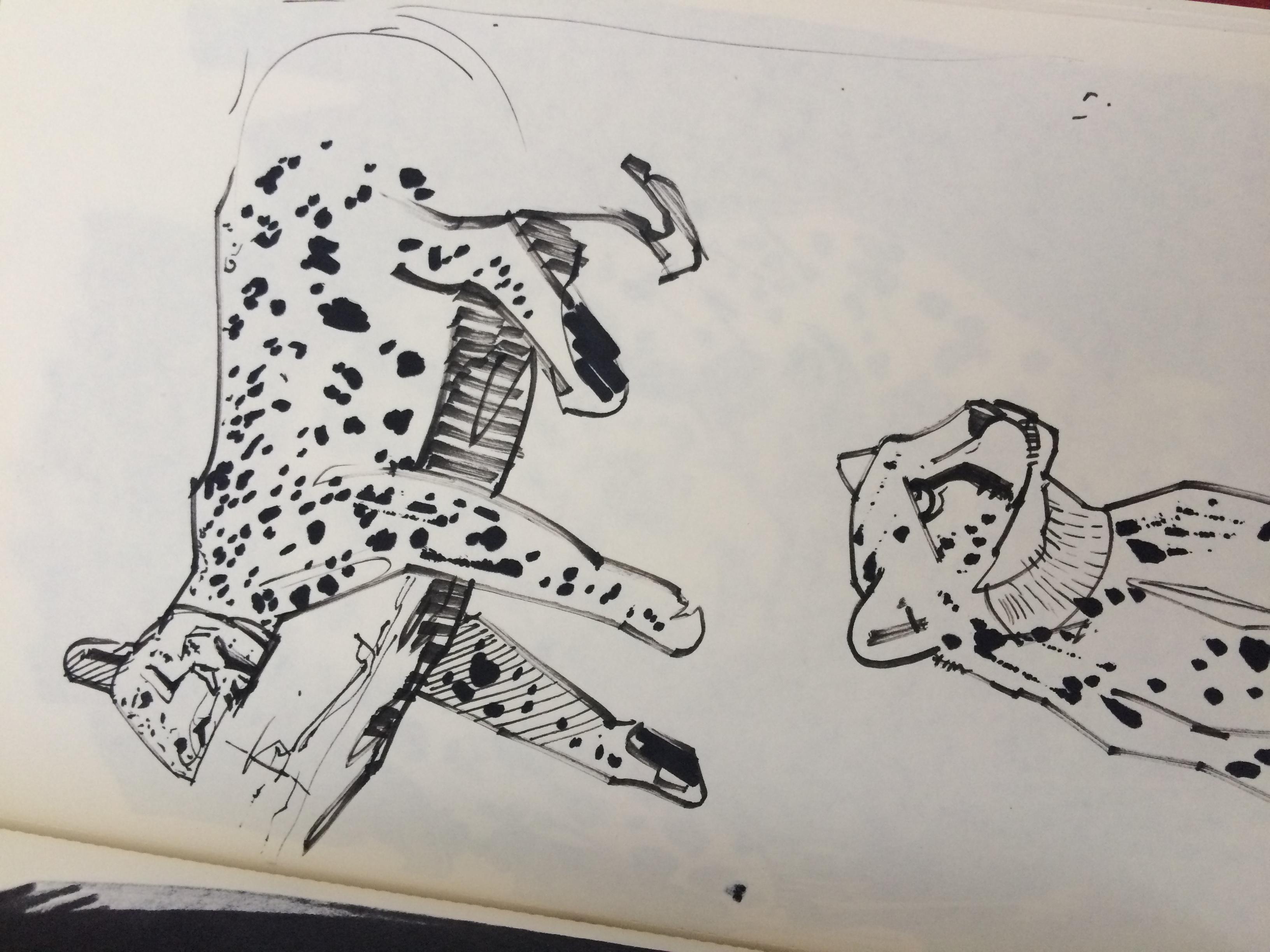animal sketch