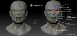 anatomy expressions / rage