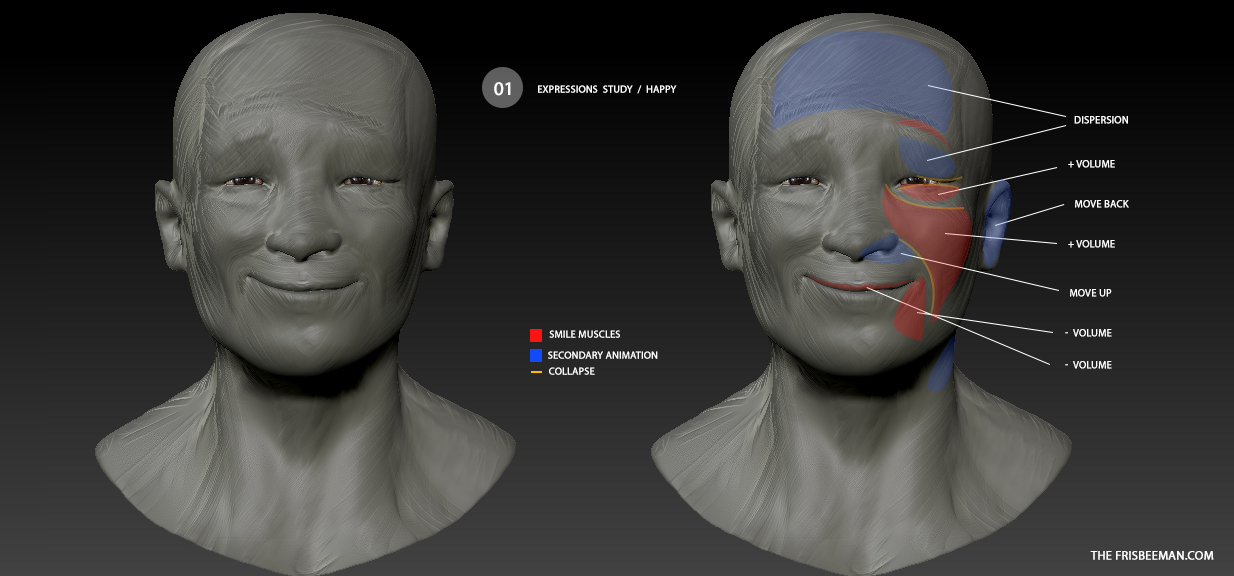 Expression estudies anatomy / Smile