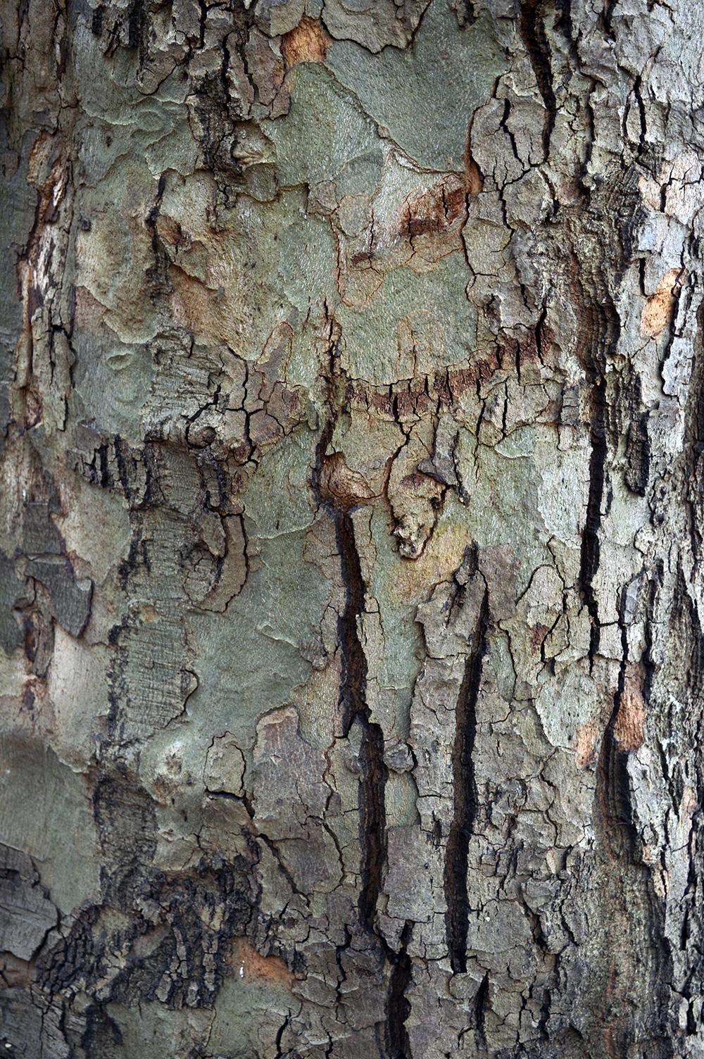 TREE01_LOW.jpg