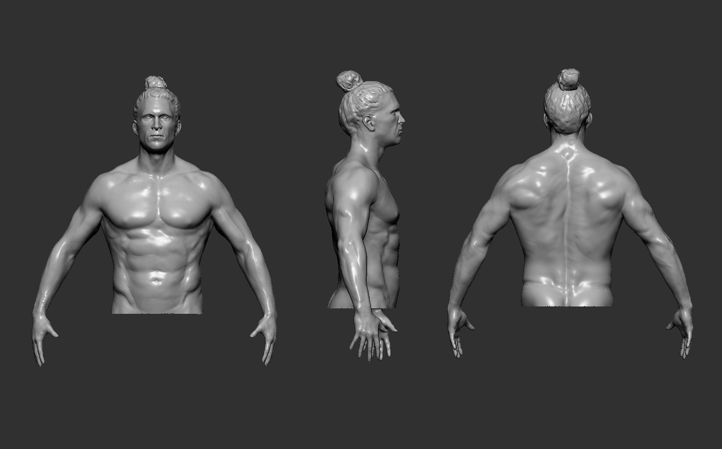 anatomy study 3d torso