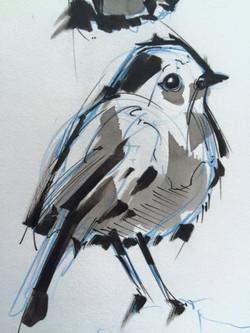 sketch bird with ink
