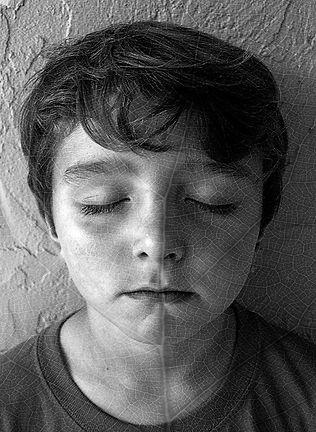 Paul Durand- Deciduous Dreaming.jpeg