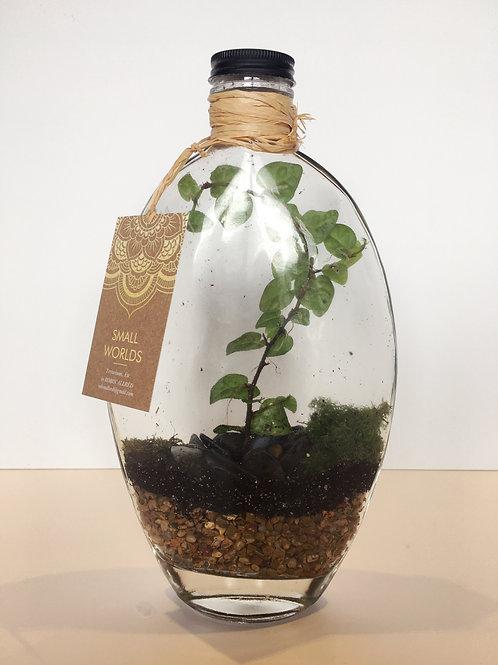 """""""Sunny Ficus"""" Terrarium"""