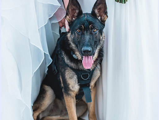 A + K | Riverside Intimate Wedding | Neuse River Banks, NC | Allie Miller Weddings | Love is Love 🌈