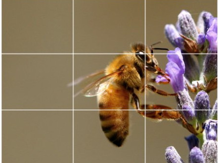 Composition   Rule Of Thirds [Education]