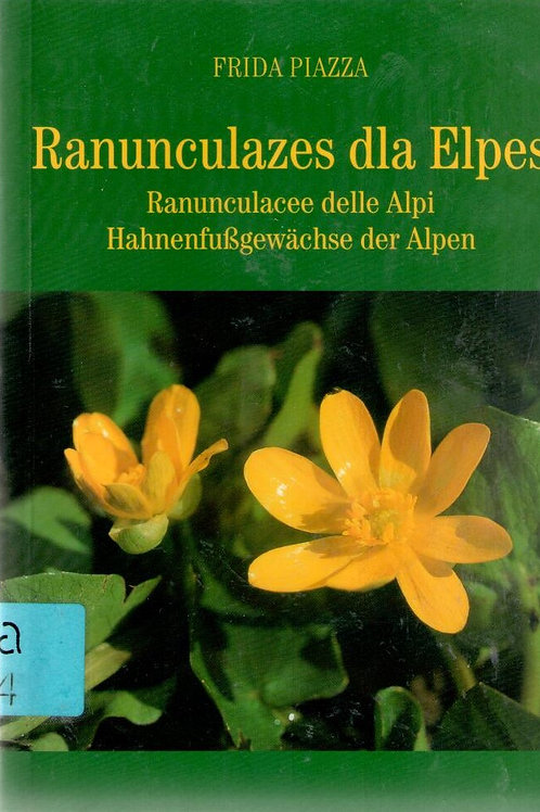 Ranunculazes dla Elpes (Frida Piazza)
