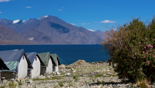 Watermark Camp, Ladakh