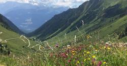 Fleurs sauvages d'Alpages