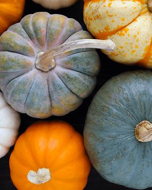 blog-featured_pumpkins-20171113-900.png