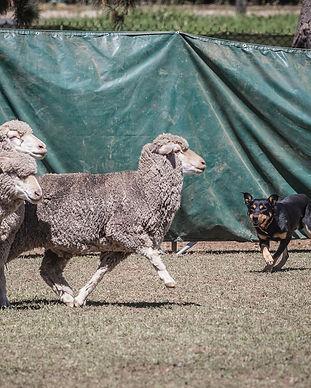 Yard+Dogs-16.jpg