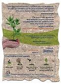papel semente