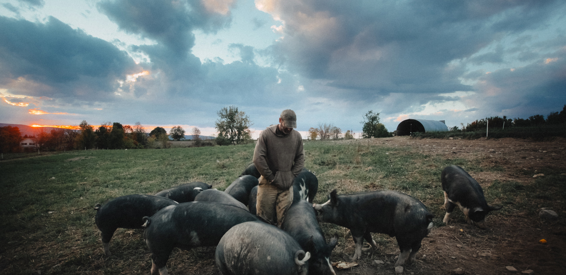 Bob with Pigs
