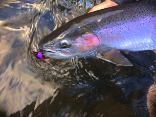 Getting your First Dry Fly Steelhead